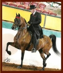 Jim Paden saddlebred morgan rider