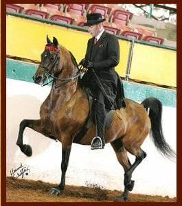 Jim Paden saddlebred morgan rider