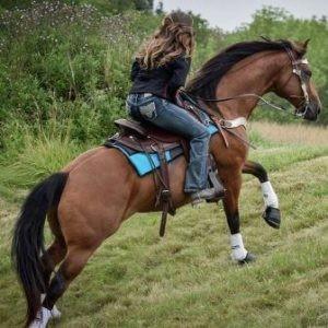 Western Saddle Pads