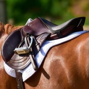 saddle seat saver