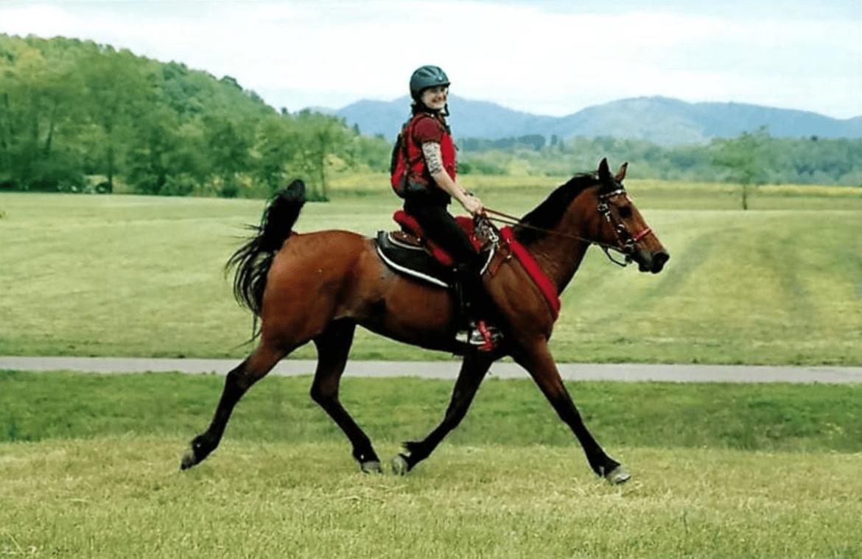 endurance riding saddle pad