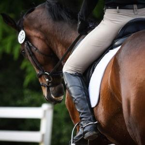 English Saddle Pads