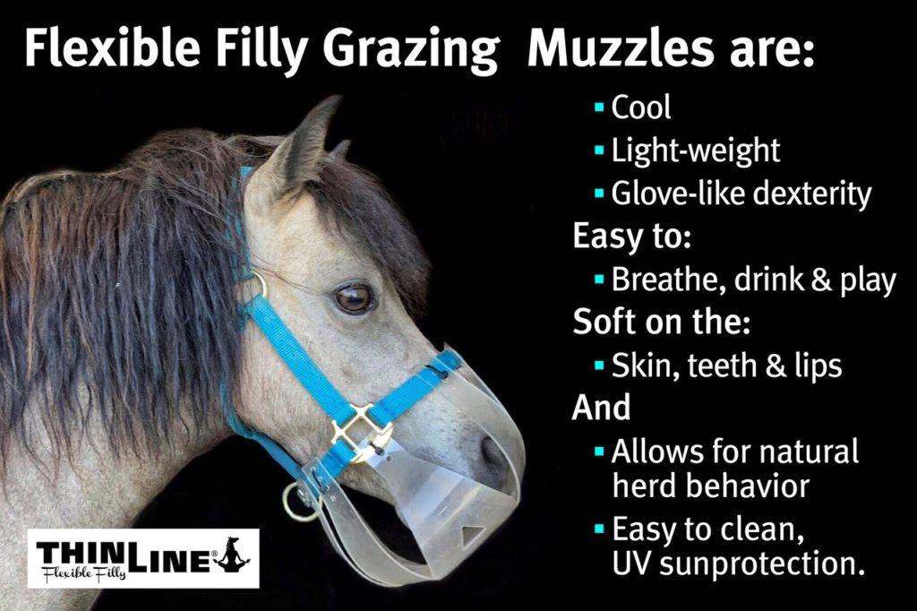 horse grazing muzzle