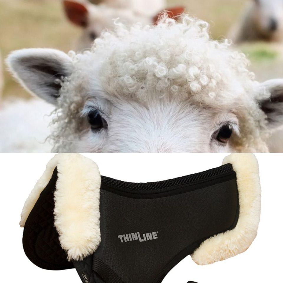 Sheep peek 7416
